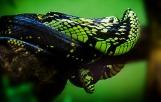 snake-959652_1920