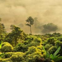 Die Hütte brennt: Amazonas-Regenwald in Flammen.